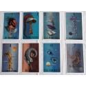 Set of Spanish Minchiata cards.
