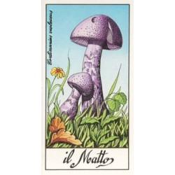 I Funghi più Belli del Mondo